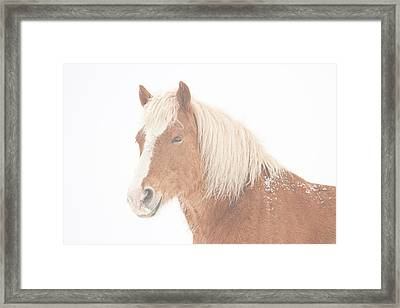 Palomino Horse Headshot Snow And Fog Framed Print by James BO  Insogna