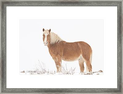 Palomino Horse In The Snow Framed Print by James BO  Insogna