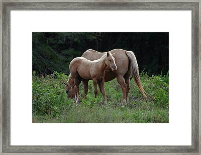 Palomino Mother And Daughter - C0726a Framed Print by Paul Lyndon Phillips