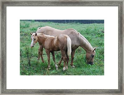 Palomino Mother And Yearling 08910792a Framed Print by Paul Lyndon Phillips