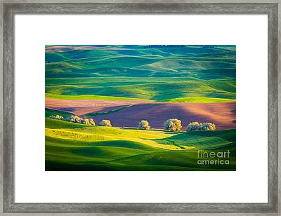 Palouse Field 3 Framed Print by Inge Johnsson