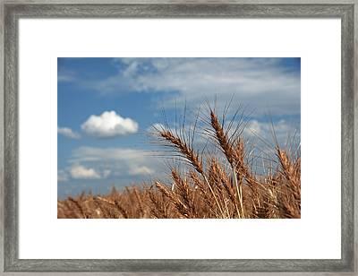 Palouse Gold Framed Print