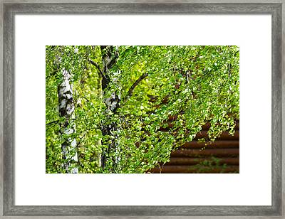 Palpitation - Featured 3 Framed Print by Alexander Senin