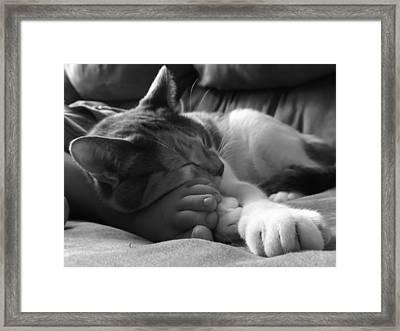 Pals Bw Framed Print by Elizabeth Sullivan