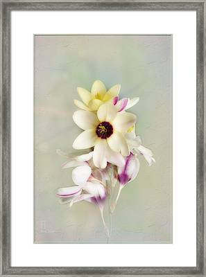 Framed Print featuring the photograph Pamela by Elaine Teague