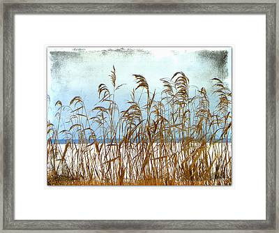 Pampas Grass Framed Print by Dianne  Lacourciere