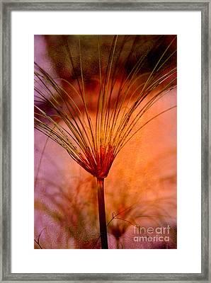 Pampas Grass - II Framed Print by Susanne Van Hulst