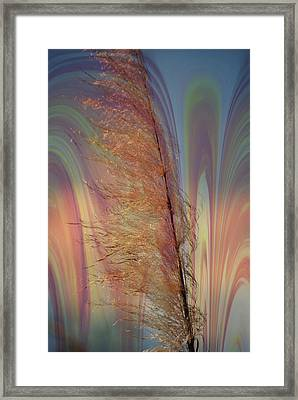 Pampas With A Glow Framed Print