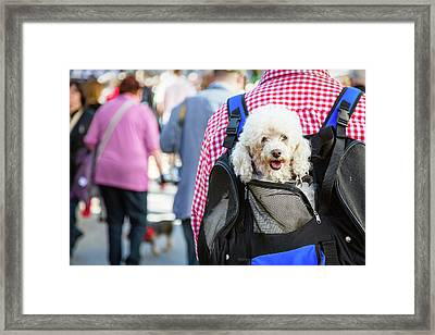 Pampered Pooches Framed Print by Elena Eliachevitch
