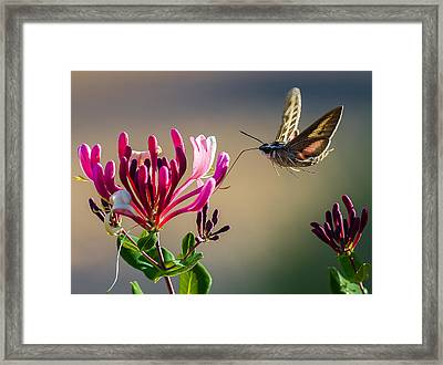 Pam's Pink Sphinx Framed Print by Cecil K Brissette