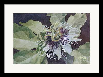 Passionfruit Paintings Framed Prints