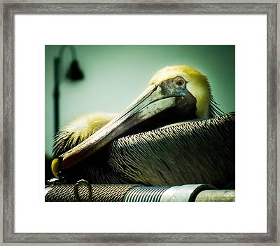 Pancake The Pelican Framed Print by Karen Wiles