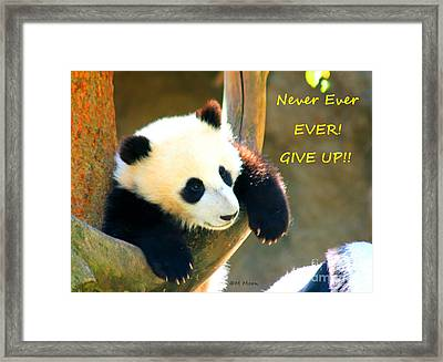 Panda Baby Bear Never Ever Ever Give Up Framed Print