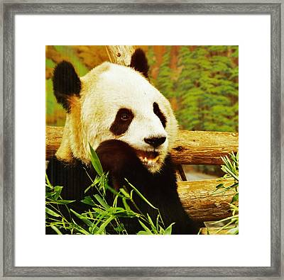Panda Bear Framed Print by Al Fritz