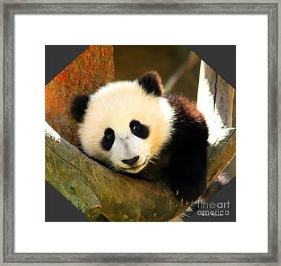 Panda Bear Baby Love Framed Print