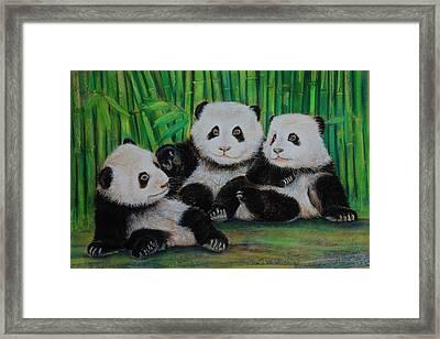 Panda Cubs Framed Print
