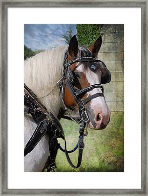 Pandora In Harness Framed Print by Fran J Scott