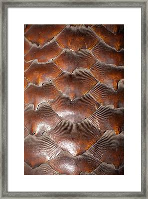 Pangolin Scales Framed Print by Paul D Stewart