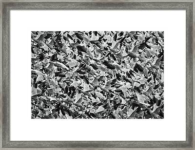 Panic Framed Print by Mark Kiver