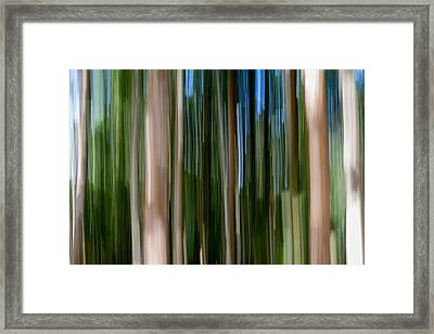 Panning Forest 2 Framed Print by Stelios Kleanthous