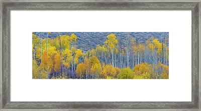 Panorama Aspens Winthrop Western Framed Print by Tom Norring