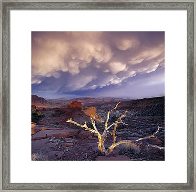 Panorama Point Framed Print