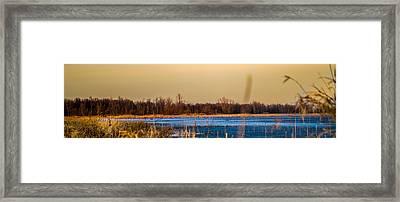 Panoramic Goose Home Framed Print by Bruno Santos