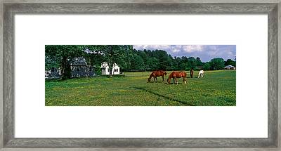 Panoramic View Of Horses Grazing Framed Print
