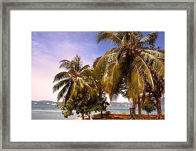 Panoramic View Of Nature With The Green Coconut Trees  Framed Print