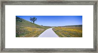 Panoramic View Of Spring Flowers, Tree Framed Print by Panoramic Images