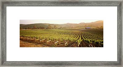 Panoramic View Of Vineyards, Carneros Framed Print
