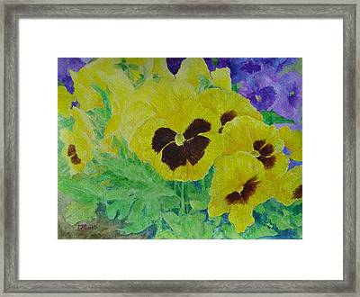 Pansies Colorful Flowers Floral Garden Art Painting Bright Yellow Pansy Original  Framed Print