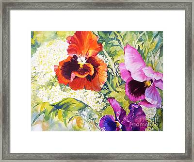 Pansies Delight #2 Framed Print by Betty M M   Wong