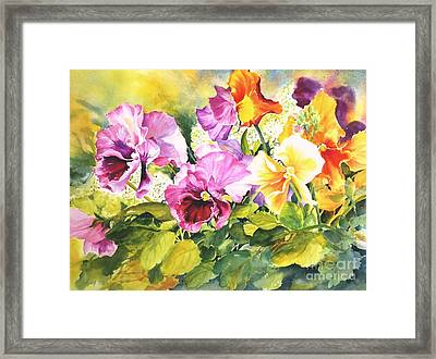 Pansies Delight #3 Framed Print by Betty M M   Wong