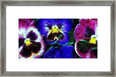 Pansies With Faces Framed Print by Anne-Elizabeth Whiteway