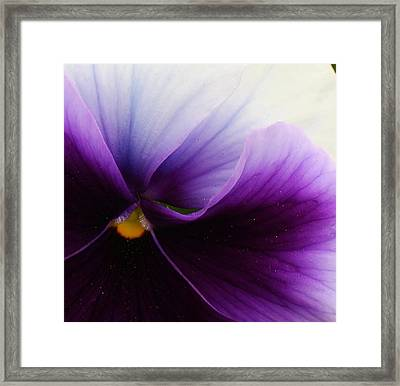 Pansy Abstract Framed Print by Bruce Bley