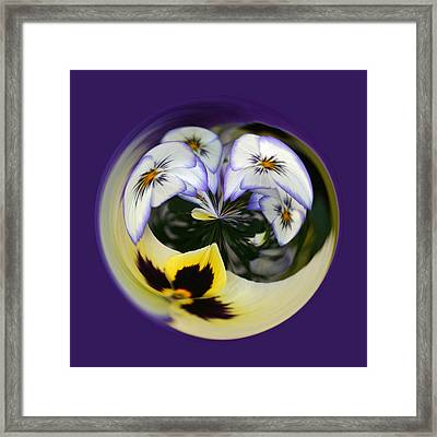 Pansy Ball Framed Print