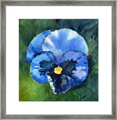 Pansy Blue Framed Print