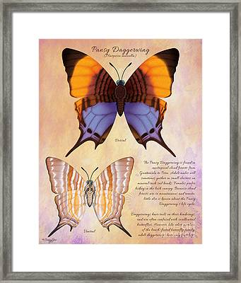 Pansy Daggerwing Butterfly Framed Print by Tammy Yee