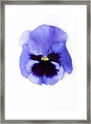 Pansy Face Framed Print by Anne Gilbert