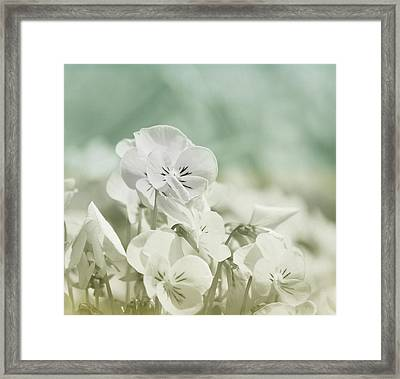 Pansy Flowers Framed Print by Kim Hojnacki