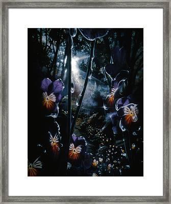 Pansy Path Framed Print by Lynette Yencho