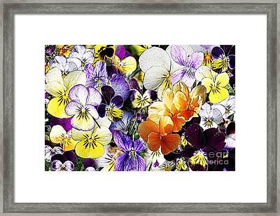 Pansy Posy Framed Print by Erica Hanel