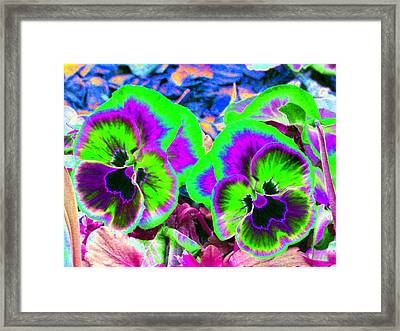 Pansy Power 60 Framed Print by Pamela Critchlow