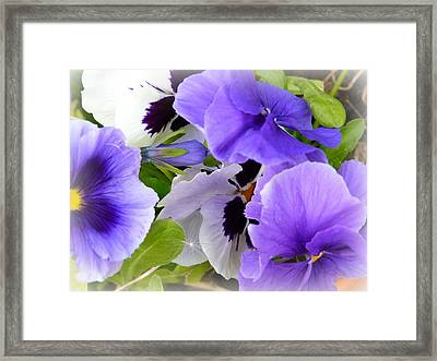 Pansy's Framed Print by Debra Collins
