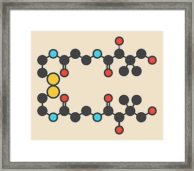 Pantethine Dimeric Vitamin B5 Molecule Framed Print