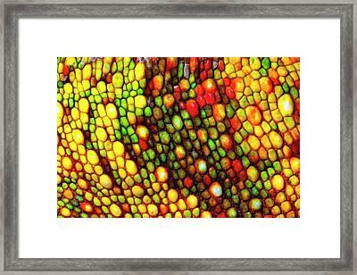 Panther Chameleon Skin Framed Print by Alex Hyde