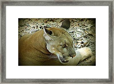 Panther Framed Print by Debra Forand