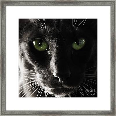 Panther Eyes Framed Print by Michael Canning