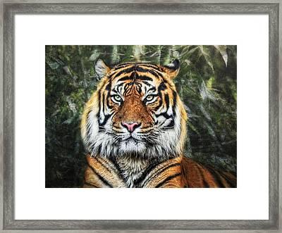 Panthera Tigris II Framed Print by Joachim G Pinkawa